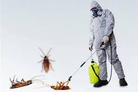 One Time Residential Pest Control Service, in Kanpur, Rs 1000 /day | ID:  22389529897