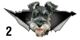 Schnauzer Car Sticker Dog Car Decal Schnauzer Decal Car Etsy