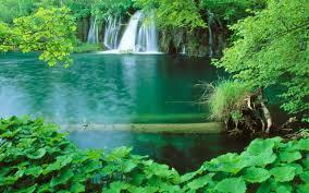 forest hd nature wallpaper 3d