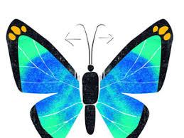 La simetría en los seres vivos | La Verdad
