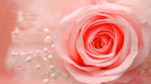 خلفيات ورود اجمل صور خلفيات الورود كلام حب