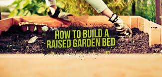 build and plant a raised garden bed