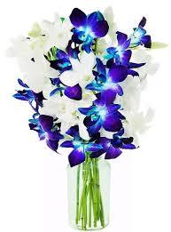 stunning blue white orchids send