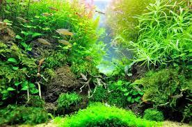 get rid of hair algae in fish tank