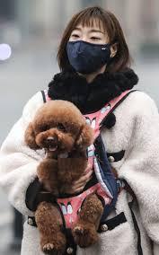 A Wuhan vita a rischio per 50.000 cani e gatti