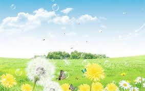 dandelion pictures are beautiful and