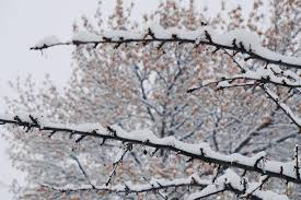 I Love The Look Of Snow As It Sits On Branches It Looks Like A Blanket For The City Meanderingmercedes Sno In 2020 Outdoor Adventure Outdoor Snow