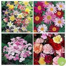 save 25 playful perennial garden
