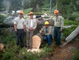 Stump Removal by Deso Volunteer Sawyers