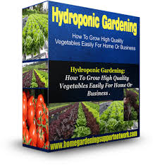 hydroponic gardening growing high