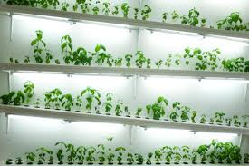 hydroponics for small apartments