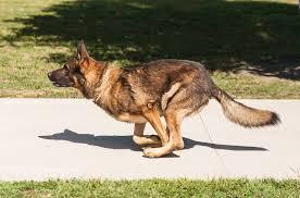 Police Dog Demonstration   Michael   Flickr