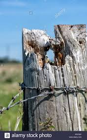 Barbed Wire On Fence Post High Resolution Stock Photography And Images Alamy