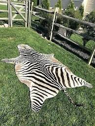 zebra hide zebra hide rug real zebra