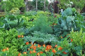 native plants at mounts botanical