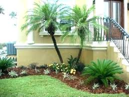 palm tree landscaping foxtail ideas