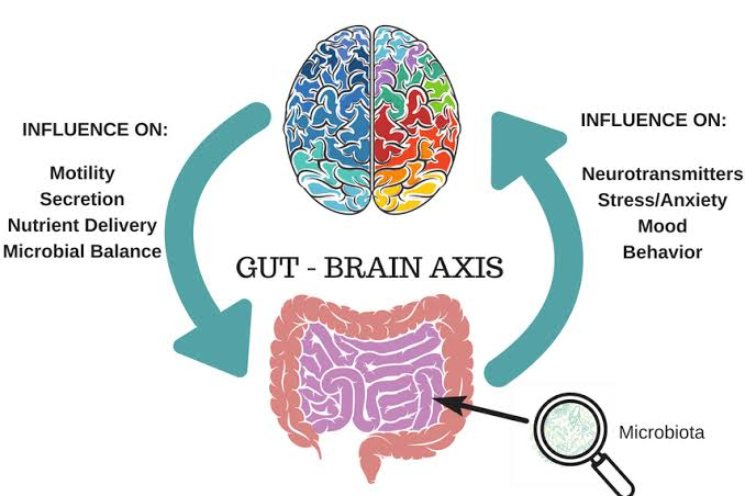 Image result for gut brain axis monash