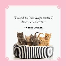best cat quotes funny cat quotes