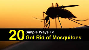 how to keep mosquitoes away 20 simple