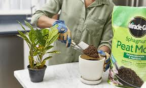 best potting soil for your plants the
