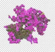 bush transpa background png clipart