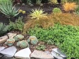 new drought tolerant plant design you