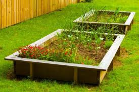 raised beds grow in popularity