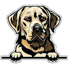 Amazon Com Yellow Lab Vinyl Sticker Decal Labrador Retriever Sticker For Tumblers Laptops Car Windows Kitchen Dining