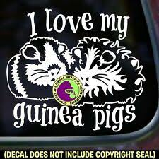 Crazy Guinea Pig Lady Vinyl Decal Sticker Cavy Pigs Love Car Window Wall Sign For Sale Online Ebay