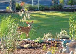 Electric Fences Help Keep Deer Out Of Garden