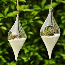 planting indoor plants glass vase