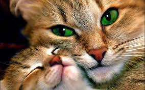 صور قطط كيوت 2020 خلفيات قطط جميلة جدا مصراوى الشامل