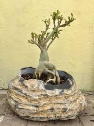 natural stone pot pots garden beds