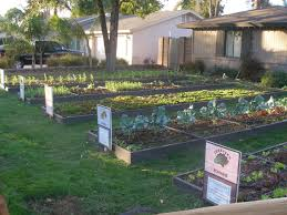 vegetable garden design ideas gardens