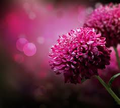 صور زهور اجمل الصور للزهور والورود كيوت