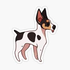 Rat Terrier Stickers Redbubble
