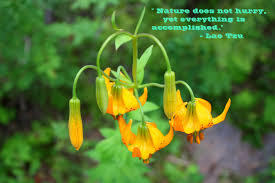 nature does not hurry flowers quote com