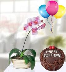 my dream orchids birthday gift set