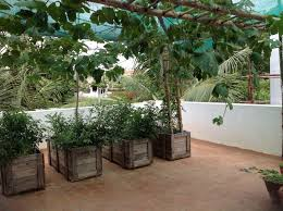 terrace garden organic thoughts ideas