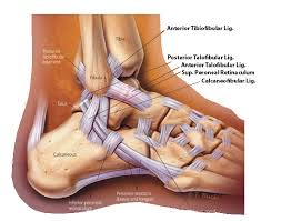 ankle sprain foot ankle orthobullets