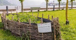 build a raised bed vegetable garden