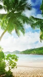 tropical beach palm trees sand sea