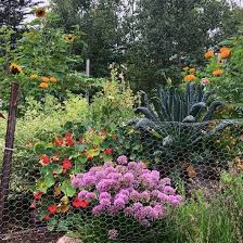Savvy Gardening What S Up With The Chicken Wire Fence A Facebook