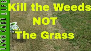 kill weeds in the lawn without killing