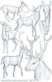 Pin by Jona Myrtle Ryan on List | Animal drawings, Animal sketches, Deer  drawing