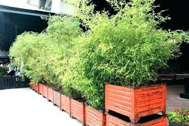 tall container plants potted for patio