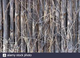 Tree Trunk Fence High Resolution Stock Photography And Images Alamy