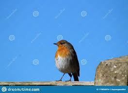 A Garden Robin Standing On A Fence Post Stock Photo Image Of Garden Cute 179896876