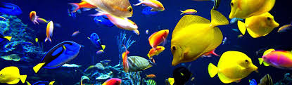 Underwater Background - Fish Background - Coral Background | Free ...