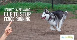 Fence Running One Cue That Will Get Your Dog To Stop